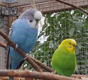 Lilla Blå och Fina