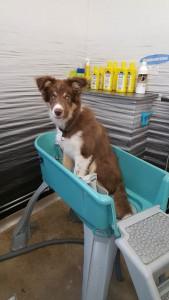 Superbra badkar OM man är en liten hund.