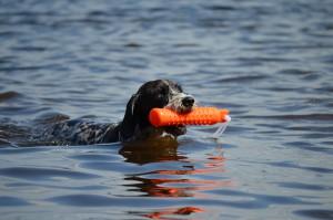 Dixie älskade att apportera i vatten
