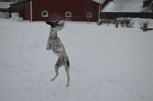 Snöbollar vad kul!!