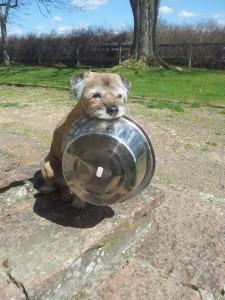 Busiga Thelma som välte ut alla vattenskålar i sin jakt efter mat...